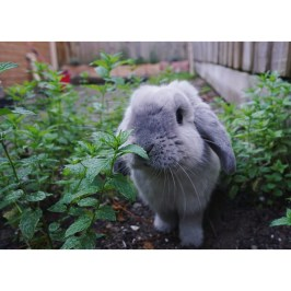 Don't forget about bunnies! They are affectionate, quiet and clean, what more could you want from a pet? This is Murphy and he is a big sook (he loves kisses and cuddles). - Alyce