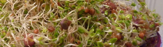 4 Reasons to sprout