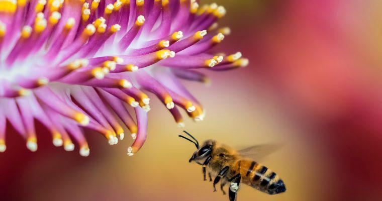 Bee Better