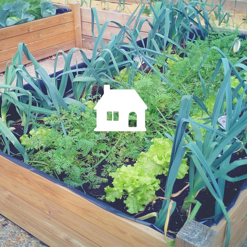 te ayudamos a implementar un huerto urbano en casa