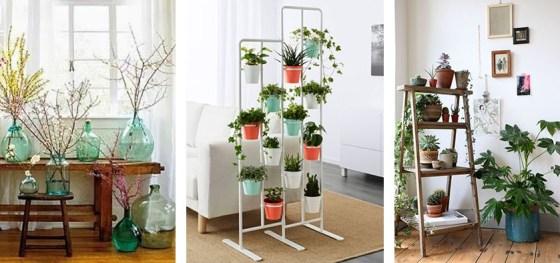 Flores_Plantas