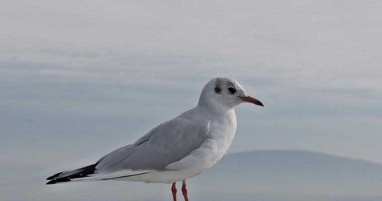 【戶外咖】鳥事一籮筐─賞鳥須知