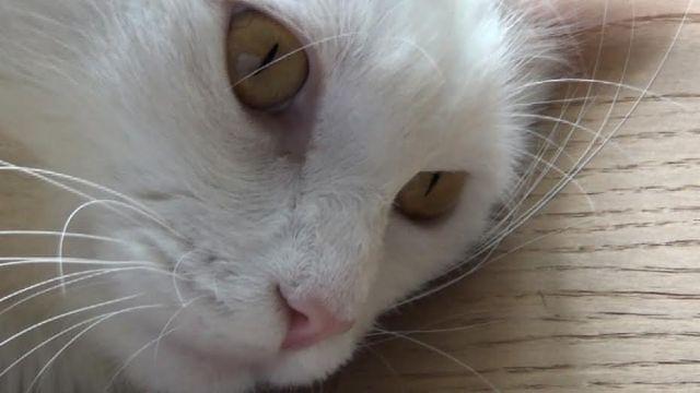 Gato Emile