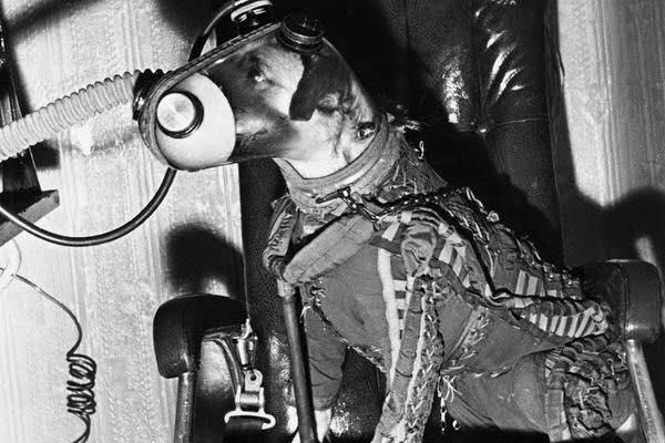 Laika en 1957