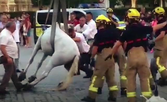 Caballo desfallecido Sevilla