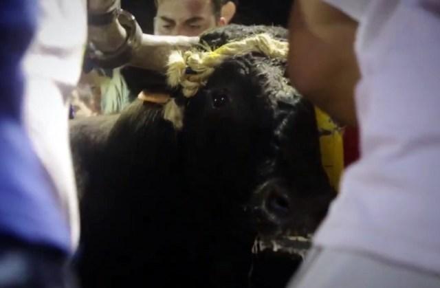toro embolado
