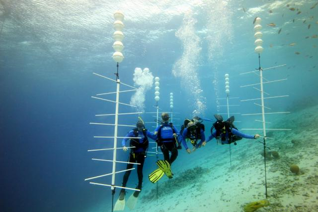 divers help with coral reef restoration in bonaire