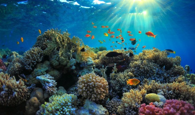 sunbeams shine down on a colorful coral reef