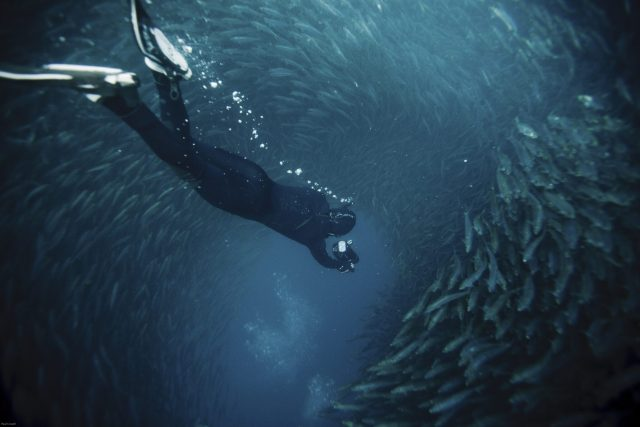 padi freediver at south africa sardine run