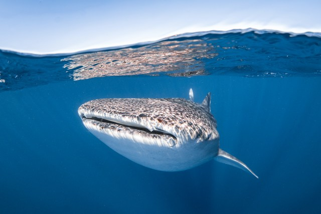 The Top 5 Scuba Diving Destinations in April - Ningaloo Reef Australia