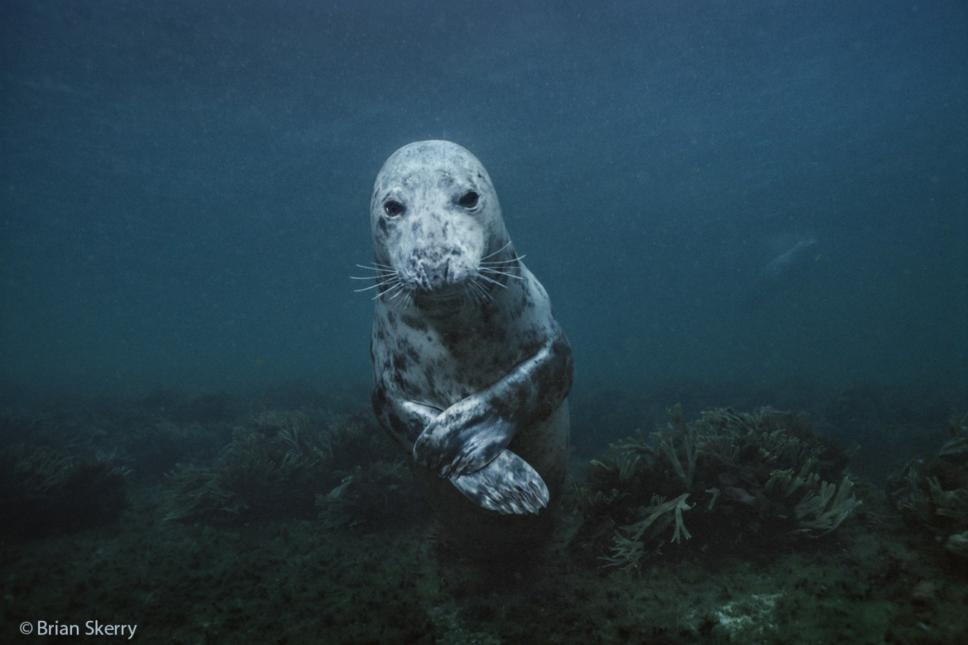 Brian Skerry: The Evolution of an Underwater Explorer