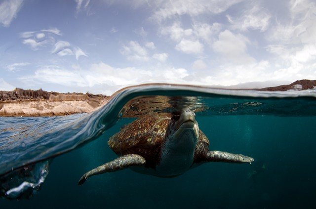 Canary Islands - Blue Water - turtle- advanced open water diver