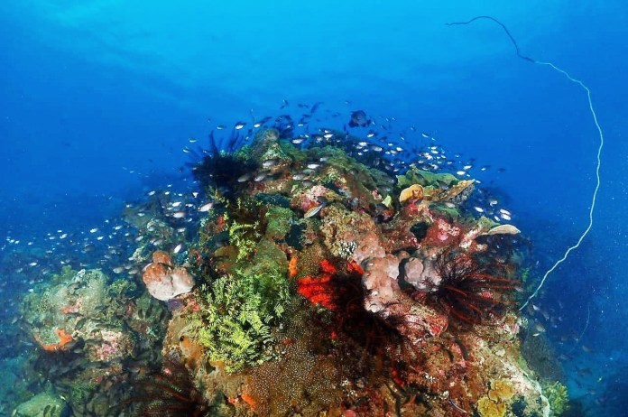 Diving Jakarta And Surabaya In Java Indonesia