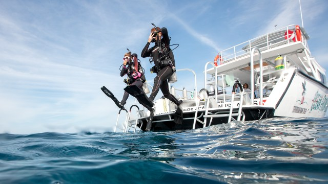 Two scuba divers entering the water; in the English language you can either say they dived into or dove into the water
