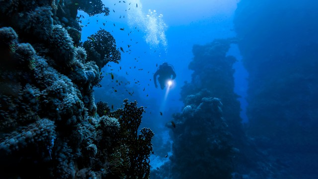 PADI Deep Diver Exploring a deep reef