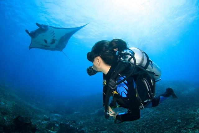 Diver looking at Manta Ray