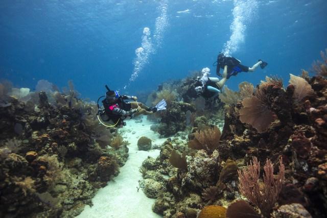 Divemaster - PADI Pro - Scuba Divers - Topside - Beach