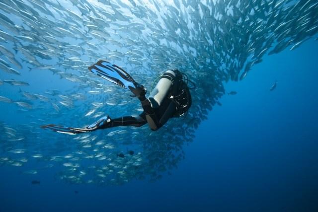 Scuba Diver - Fish - Open Water - Ocean - Marine LIfe