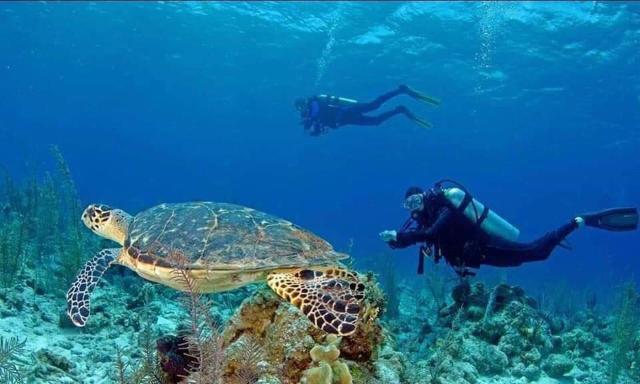 underwater shot with turtle of paradise taveuni resort house reef