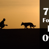 HOW TO PET MY DOG – 7 Tips For Dog Owners