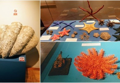 8 Tips for Exploring the National Museum of Natural History