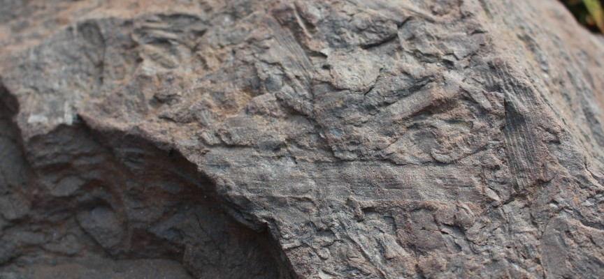 Les fossiles, eux, ne connaissent pas les saisons...