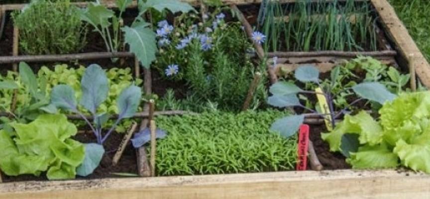 Des légumes dans 1m² de terre, c'est possible!