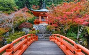 Autumn in Japan, musim gugur, autumn, tokyo, japan, musim gugur,