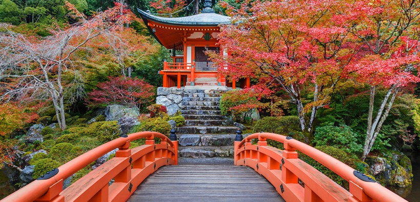 Autumn in Japan, musim gugur, autumn, tokyo, japan, musim gugur,