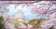 Passpod, Sakura, Bunga Sakura, Jepang
