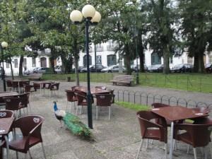 Pavão em Lisboa