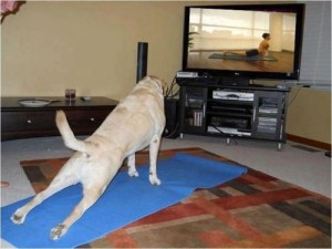 dog_exercise