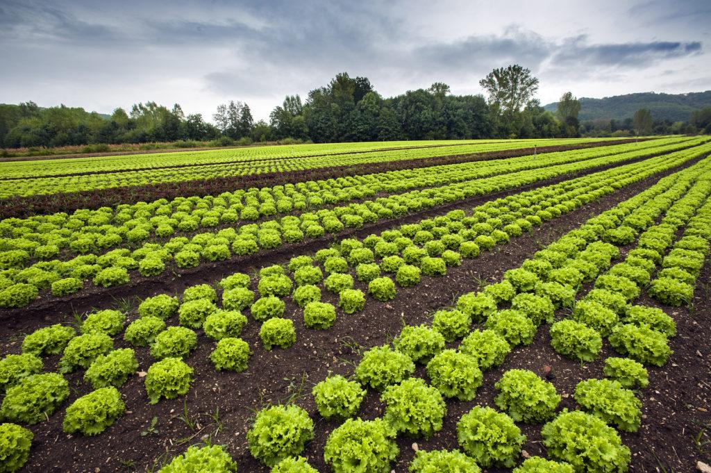 Resultado de imagem para Em busca de soluções para horticultura? A Agrishow 2019 tem!