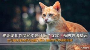 貓咪退化性關節炎是什麼?症狀、預防方法整理