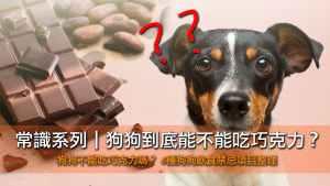 狗狗能不能吃巧克力?狗狗不能吃的禁忌食物大整理