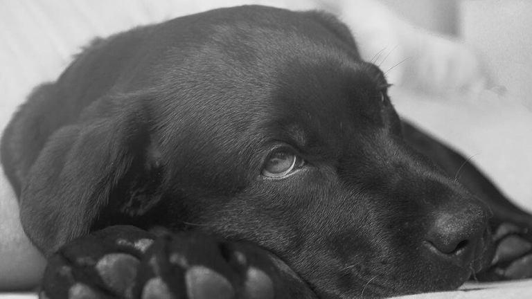 狗狗胰臟炎飲食