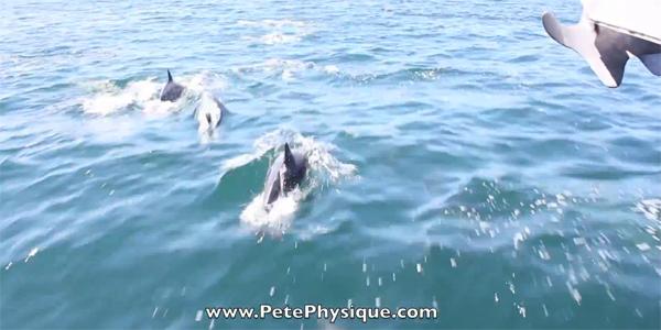 Sailing alongside dolphins