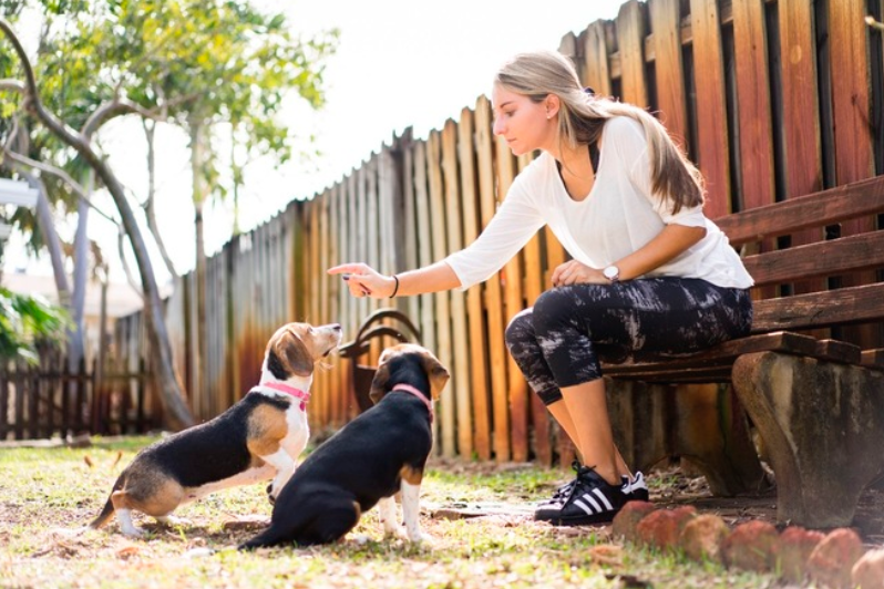 woman training two dogs to sit