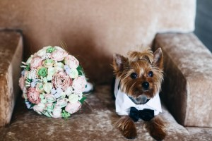 little dog with wedding bouquet