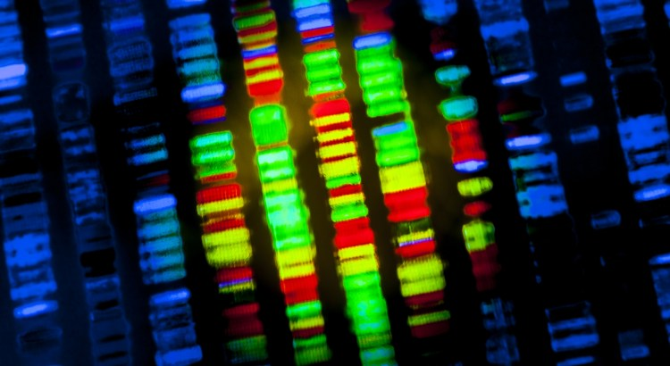 image of a genetic screen