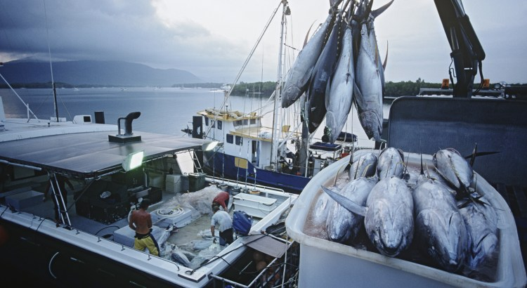 Photograph of commercial fishing vessels