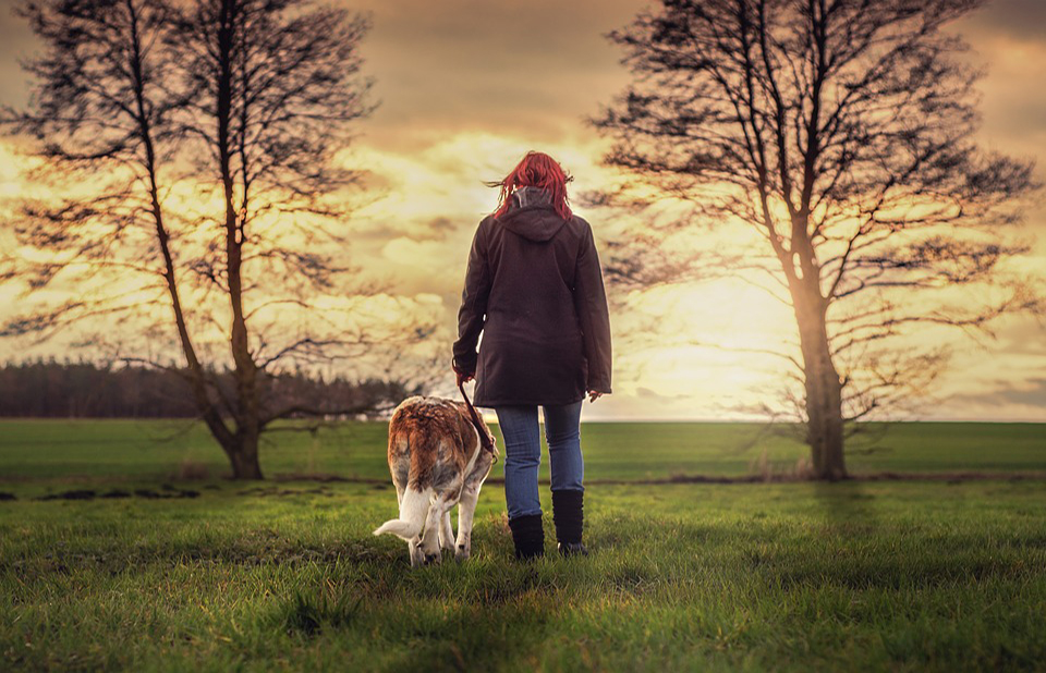 Dog and owner walking into sunset.