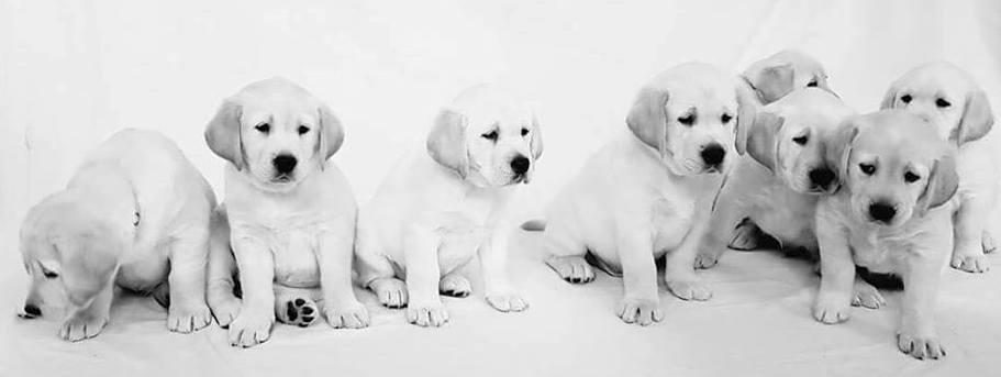 New AADI Puppies