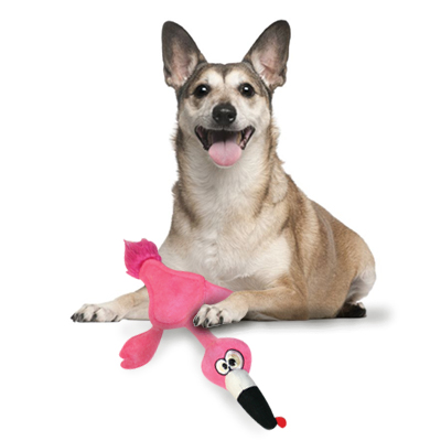 Dog with squeaky toy