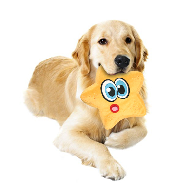 Dog chewing squeaky toy