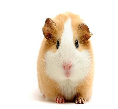 Easter Fun Day Hamster