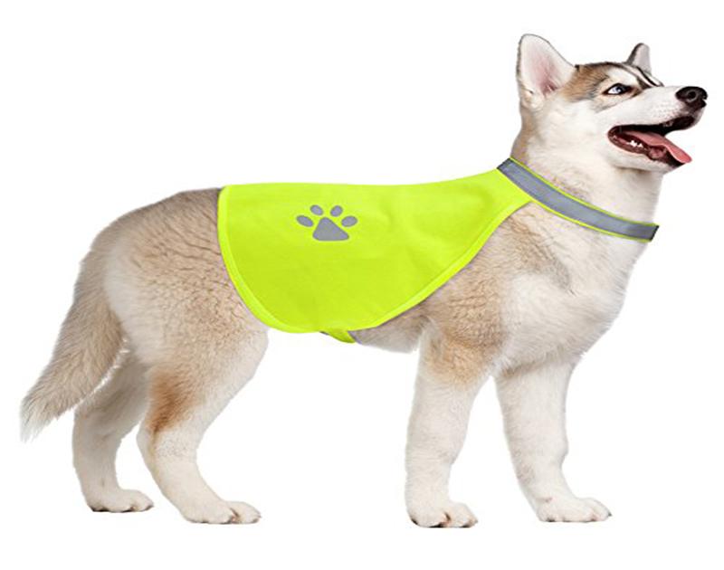 Dog in Hi-Vis