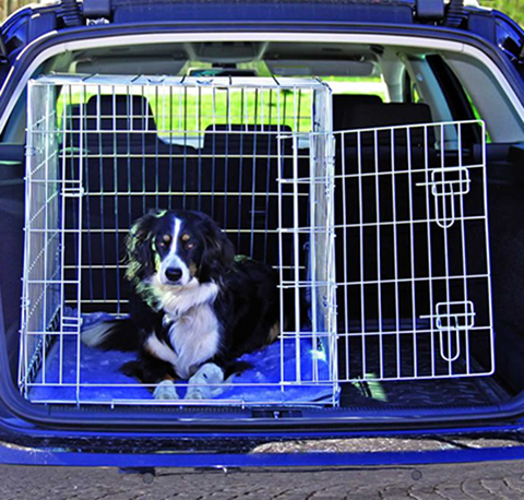 Dog travelling in crate