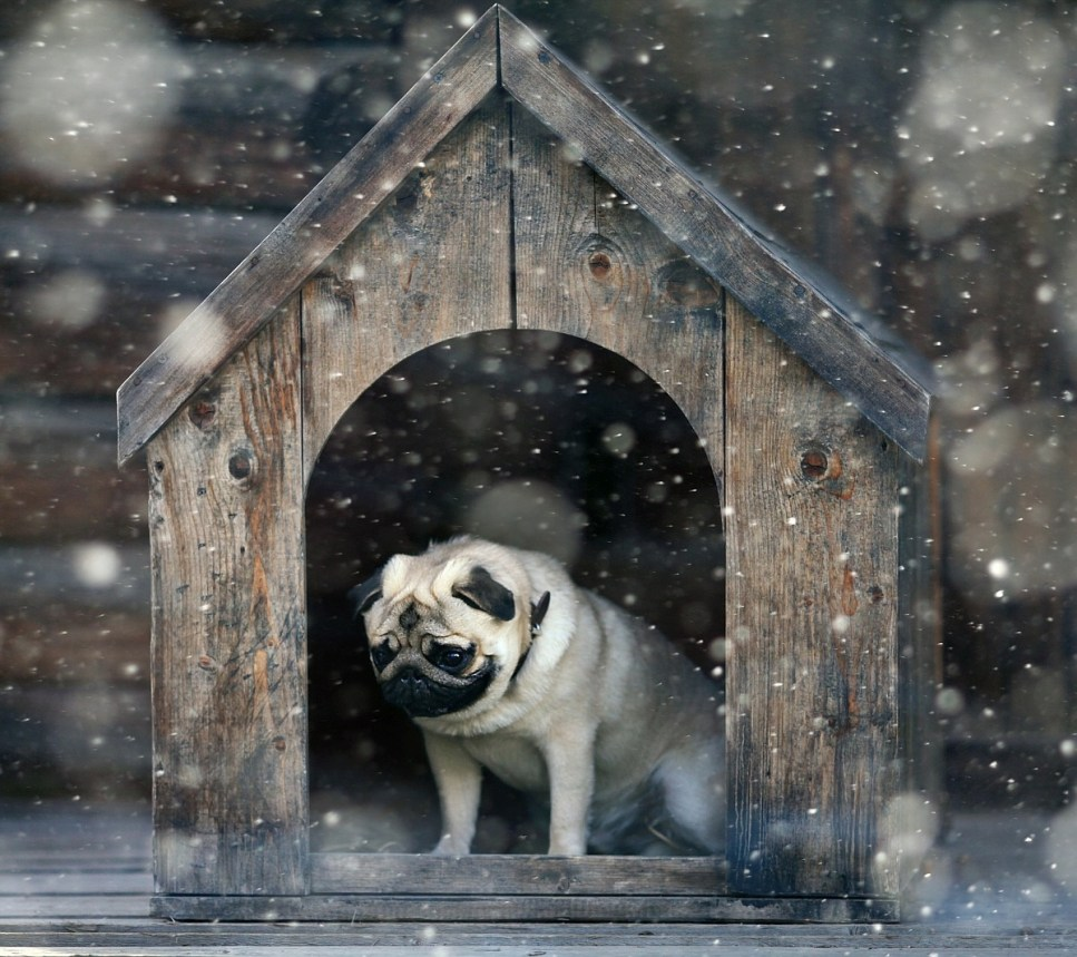 Dog outside in kennel on winter night
