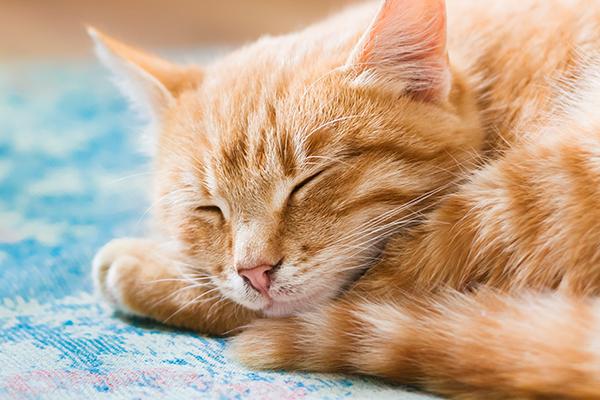 Cats love nap - cat enjoying a nap.